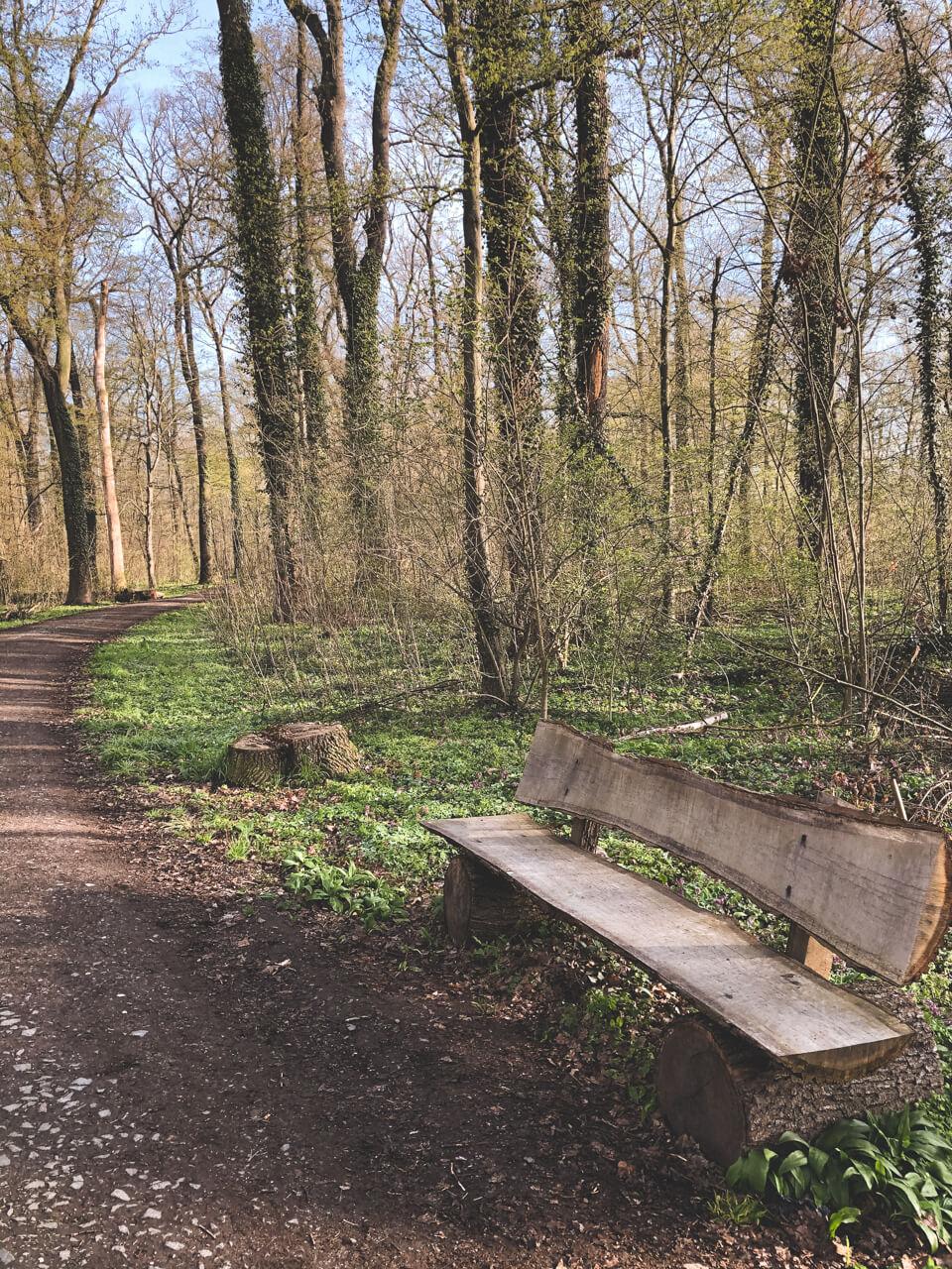 Eine Bank aus Holz im Wald