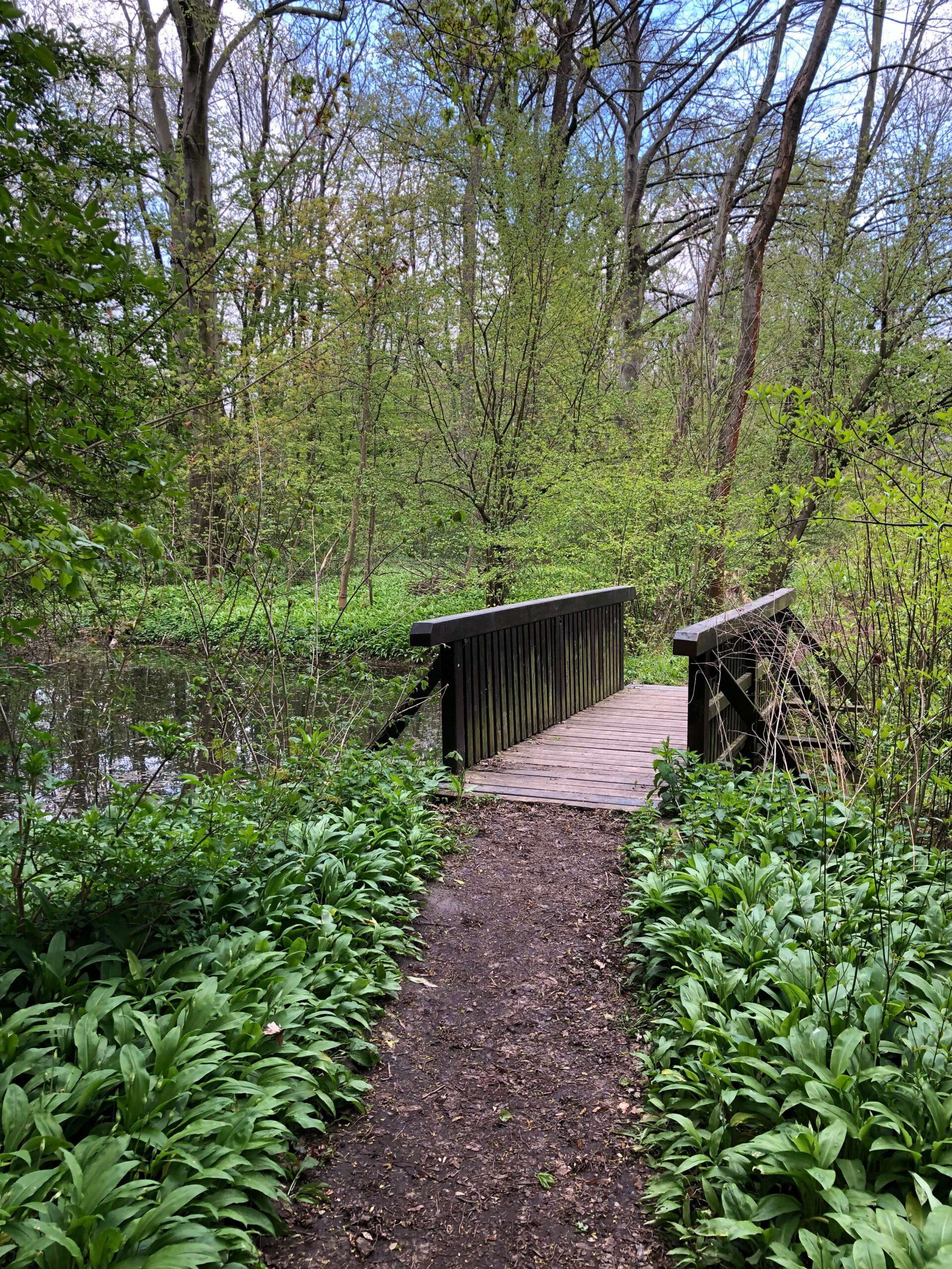 kleiner Waldweg mit Holzbrücke