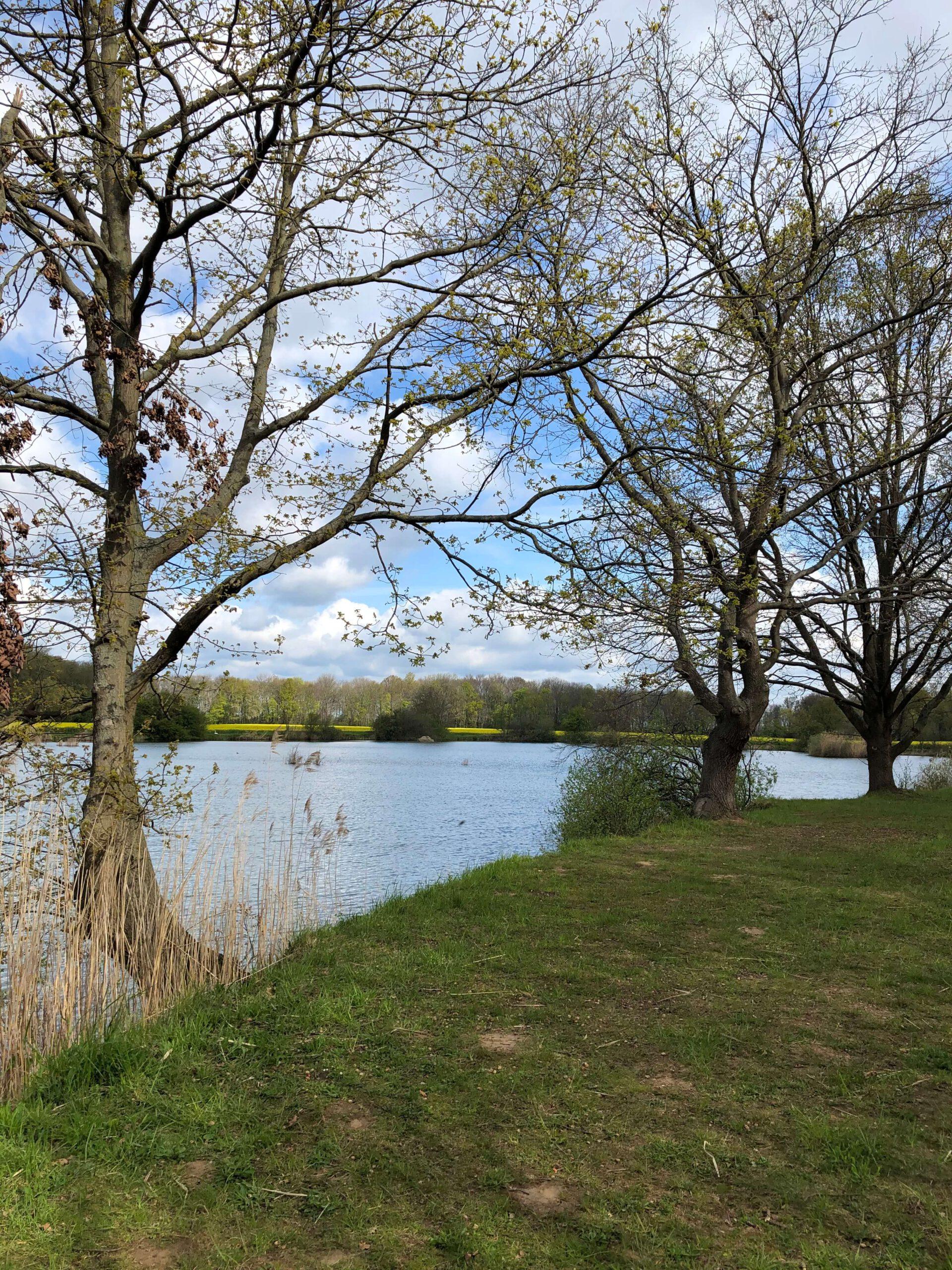 See mit Bäumen und Wiese